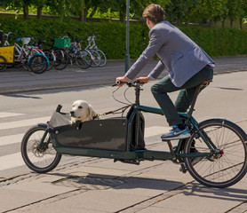 Dog transportation