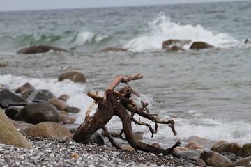Rügen Strandgut an der Ostsee