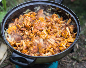chanterelle mushrooms fried in a pan
