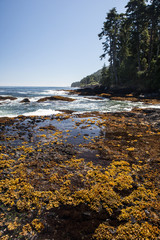 Washington Coast 3