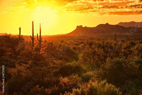 Sunset view of the Arizona desert with cacti and mountains - 67511605