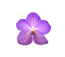 beautiful blooming orchid isolated