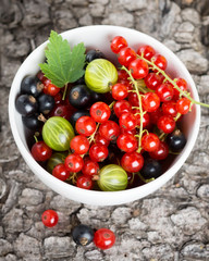 Fresh currants berries in bowl