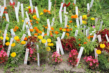 Beet in Gartenanlage mit Namensschildern
