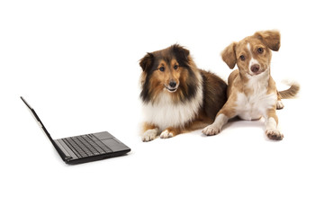 Dogs sitting besides laptop
