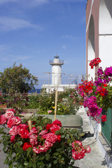 lighthouse of ventotene and flowers
