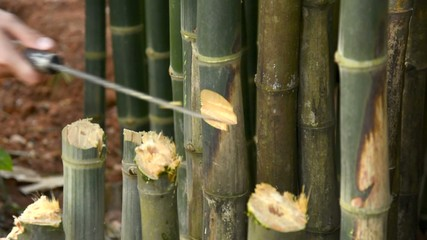 Cut the bamboo with a knife