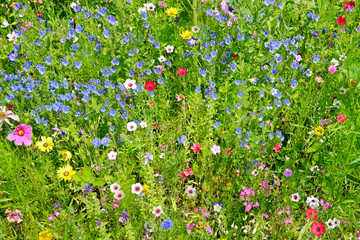 wild flowers on green meadow