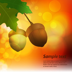 autumn acorn background with sample text