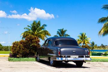 Kuba Oldtimer unter Palmen und blauen Himmel