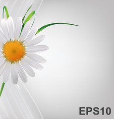 Grey abstract background with daisy and grass. Vector illustrati