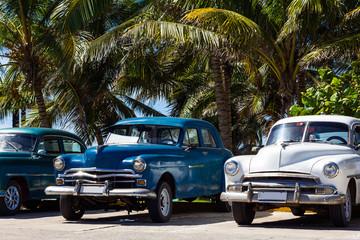 Kuba Oldtimer parkend unter Palmen