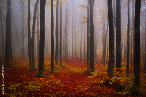 Foto op Aluminium Betoverde Bos Foggy mystic forest during fall