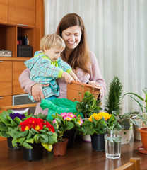 Female gardener transplanting potted flowers  in home