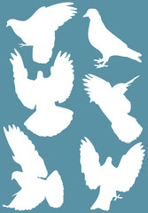 six white isolated dove silhouettes
