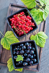 black and red currant