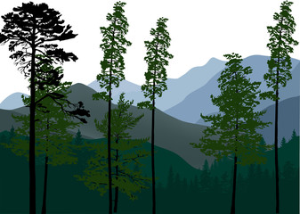 green pine trees in mountain landscape