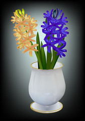 two colors hyacinth flowers in vase