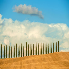Rows of cypress trees on blue sky background in Tuscany, Italy