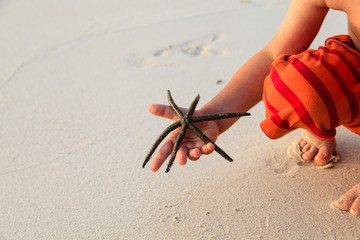 starfish in child hands
