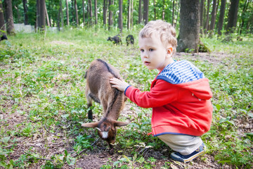 Cute boy feeding baby goat