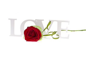 Rose with LOVE Word Isolated on White Background