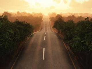 Fototapeta 3D droga przez las