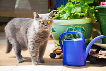 cat standing near the blue watering-pot