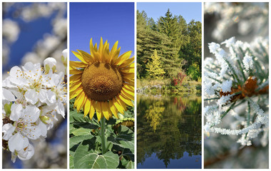 Four seasons collage: Spring, summer, autumn and winter .
