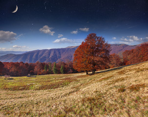 Autumn landscape in the mountains with stars and moon in the sky