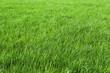 canvas print picture - Grün sind die Wiesen
