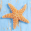 canvas print picture - Starfish