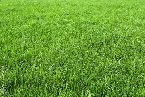 canvas print picture Grün sind die Wiesen