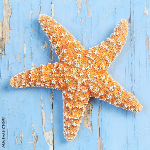 canvas print picture Starfish