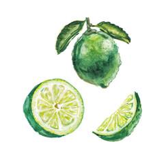 watercolor lime set