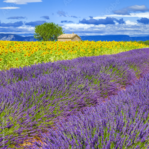 canvas print picture Lavender and sunflower field