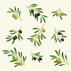 vector collection of olive branch