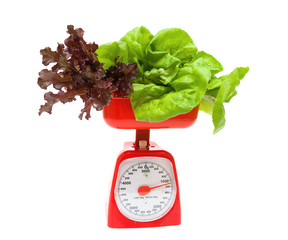 fresh lettuce and kitchen scales isolated on white background