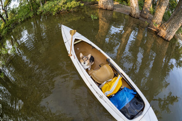 Corgi dog in canoe