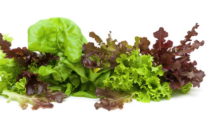 lettuce of different types on a white background