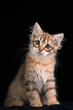 Постер, плакат: милый котенок lovely kitten