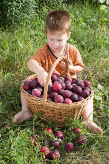 Little kid with basket of plum