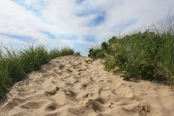 Beach on Cape Cod in Massachusetts