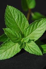 Menta - pianta