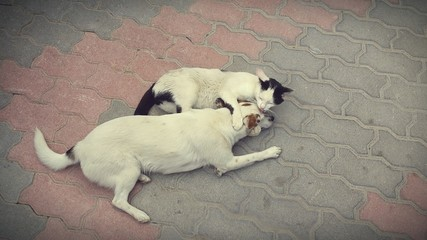 Lovely cat hugging dog