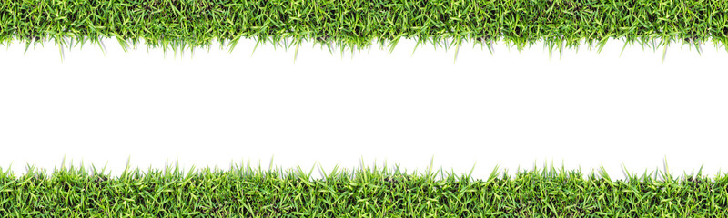 Seamless grass background  isolated on white