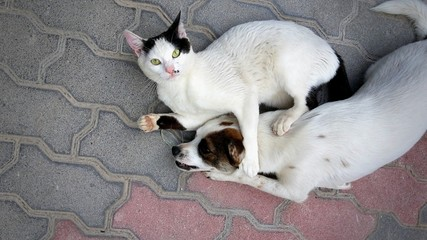 Cat hold to ransom dog
