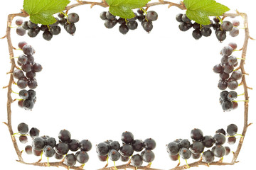 Frame with black currant