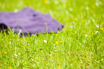 Picnic. Violet blanket on the green grass of meadow