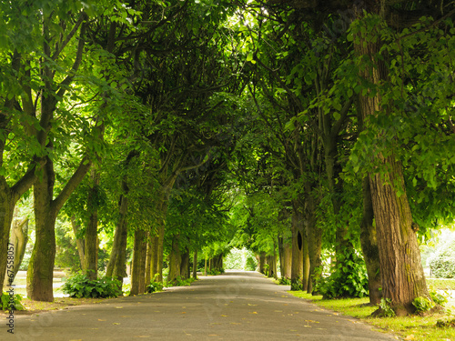 canvas print picture sidewalk walking pavement in park. nature landscape.